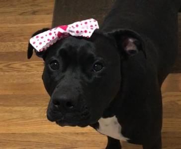 Sally showing off her pretty headband