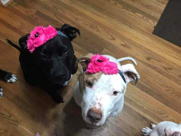 Sally and Kilo in their beautiful flower headbands