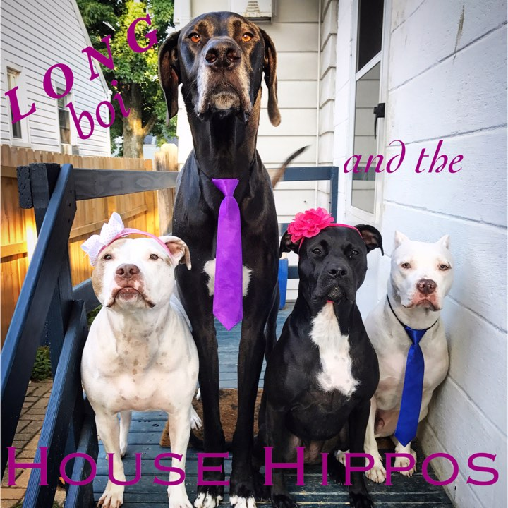long boi and the house hippos